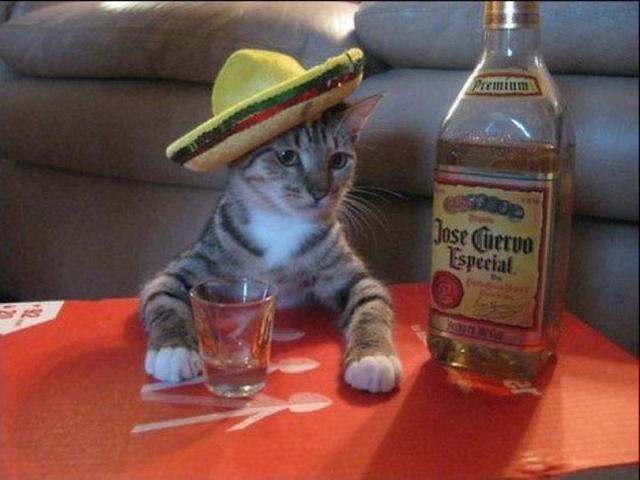 Vacation Kitty