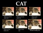 What Cats Do