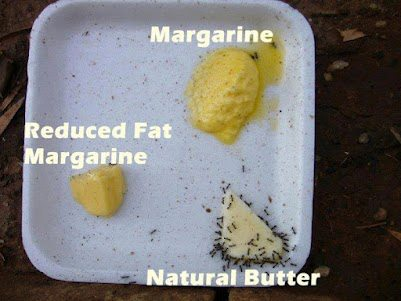 Butter vs. Margarine -- Ants Can Believe It!