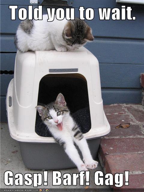 Wait Before Entering the Litter Box